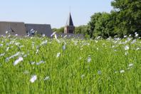 La fleur de lin: à découvrir en juin!